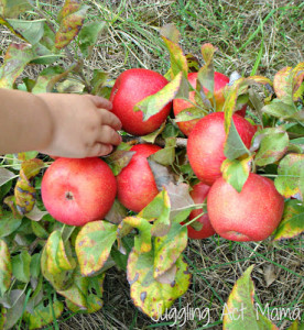 Apple Crisp Pie & Heavenly Treats