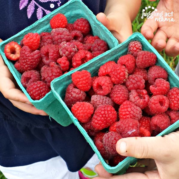 raspberry picking