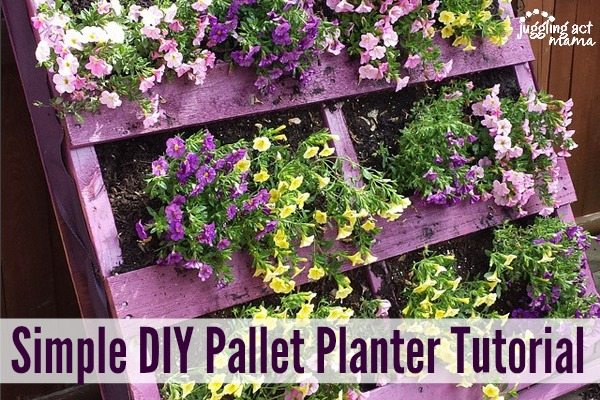 Simple DIY Pallet Planter Tutorial text with a purple pallet planter with beautiful pink, purple and yellow flowers flowing out.