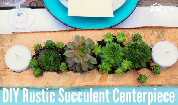 This DIY Rustic Succulent Centerpiece is a fun way to incorporate low maintenance succulent plants into your outdoor living space in just 30 minutes.