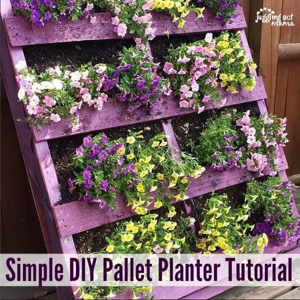 Purple pallet planter with yellow and purple flowers flowing out.