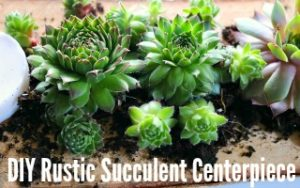 DIY Rustic Succulent Centerpiece