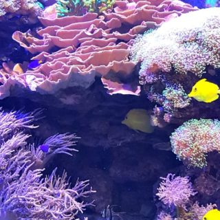 Aquarium of Niagara #ad #livegreenprotectblue #NiagaraAquarium