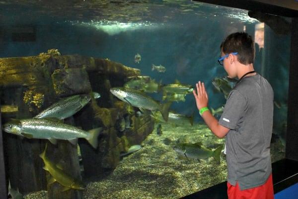 Ethan at Niagara Aquarium #ad #AquariumOfNiagara