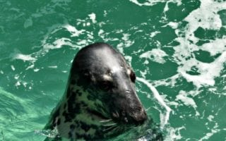 Niagara Falls Aquarium – One-of-a-Kind Seal Experience