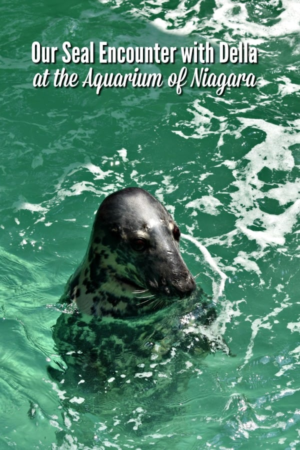 Seal Encounter at Niagara Aquarium #ad #AquariumOfNiagara #NiagaraFallsUSA #DellaTheGraySeal