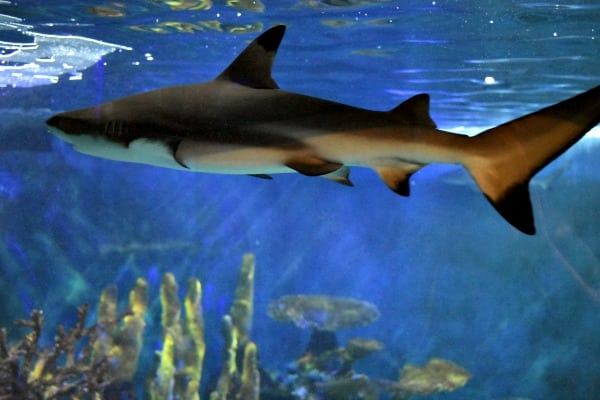 sharks at Niagara Aquarium #ad