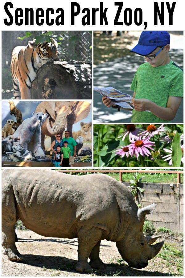 Rochester Zoo - Seneca Park Zoo #ad #SenecaParkZoo #ConnectCareConserve