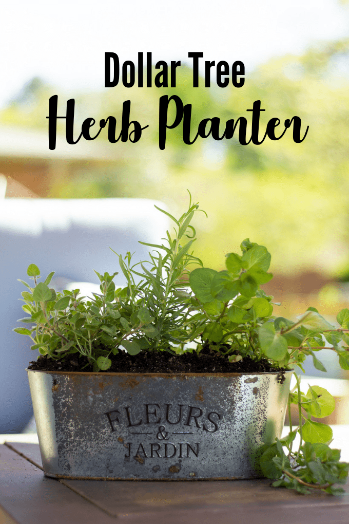 Herb Garden Planter - metal herb planter filled with oregano, rosemary, and mint