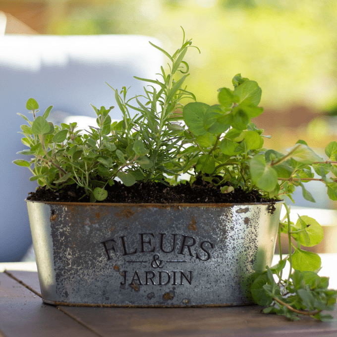 close up of metal Rustic herb garden planter