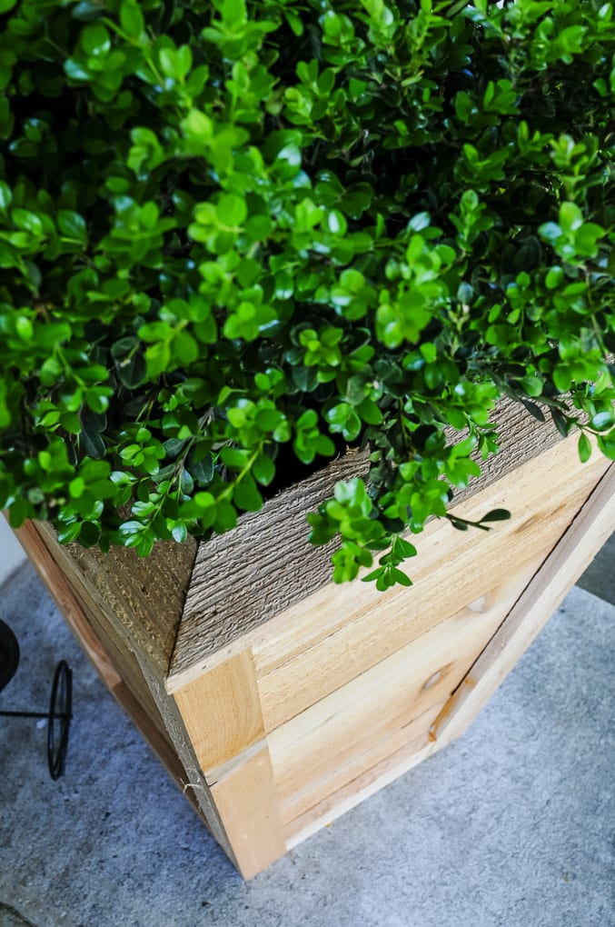 A close up of a diy cedar planter box with boxwood planted in it on a front porch.
