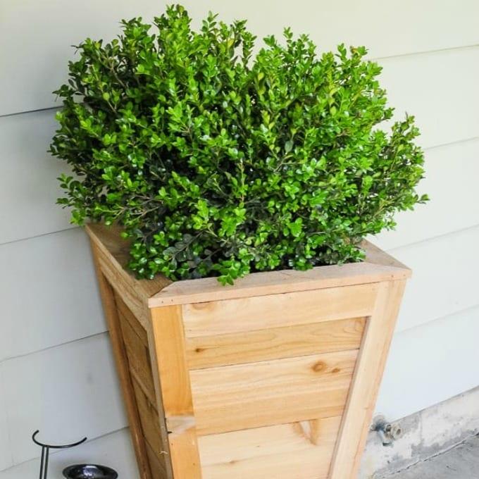 DIY Cedar Planter Box with plant.