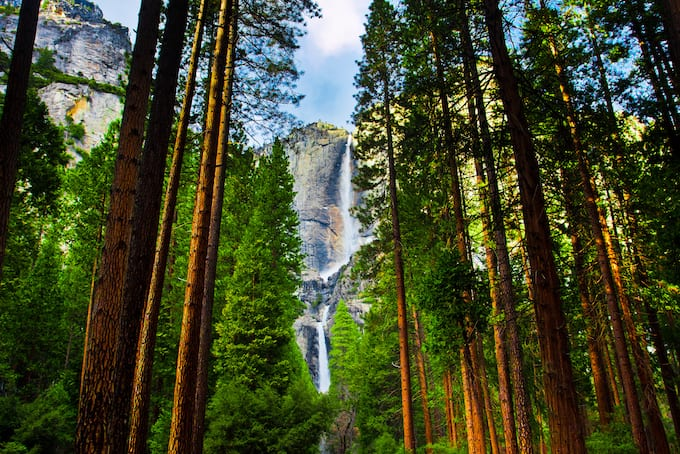 View of Yosemite National Park Falls thru Giant Sequoia Trees