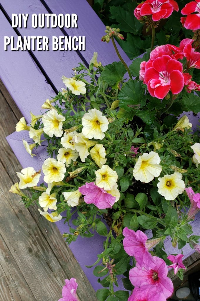 A close up of a purple Outdoor Planter Bench with pink and yellow flowers planted in it.