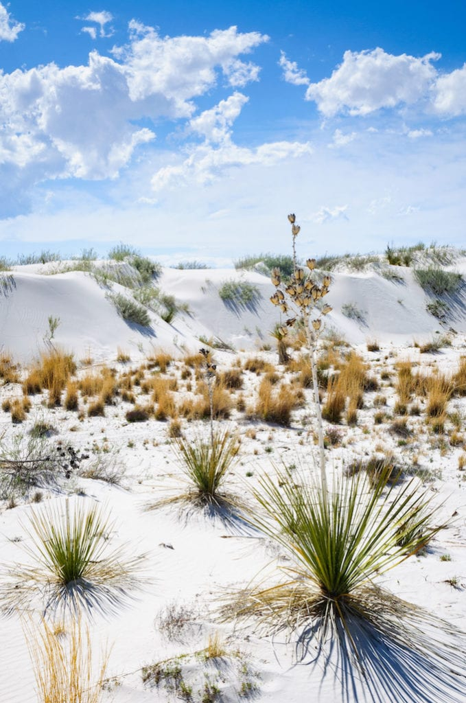 White dunes with cactus and plants with a bright blue sky.