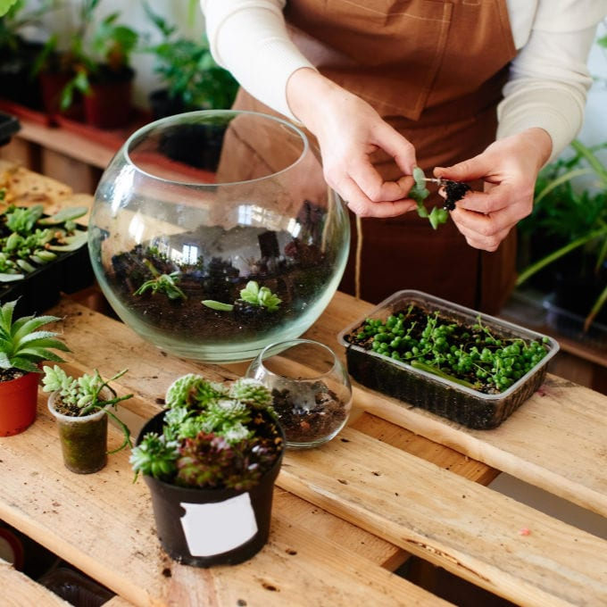 How to Make a Succulent Terrarium - woman handling succulent plants for terrarium