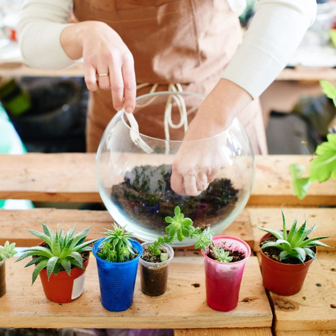 How to Make a Succulent Terrarium - woman getting ready to plant succulents