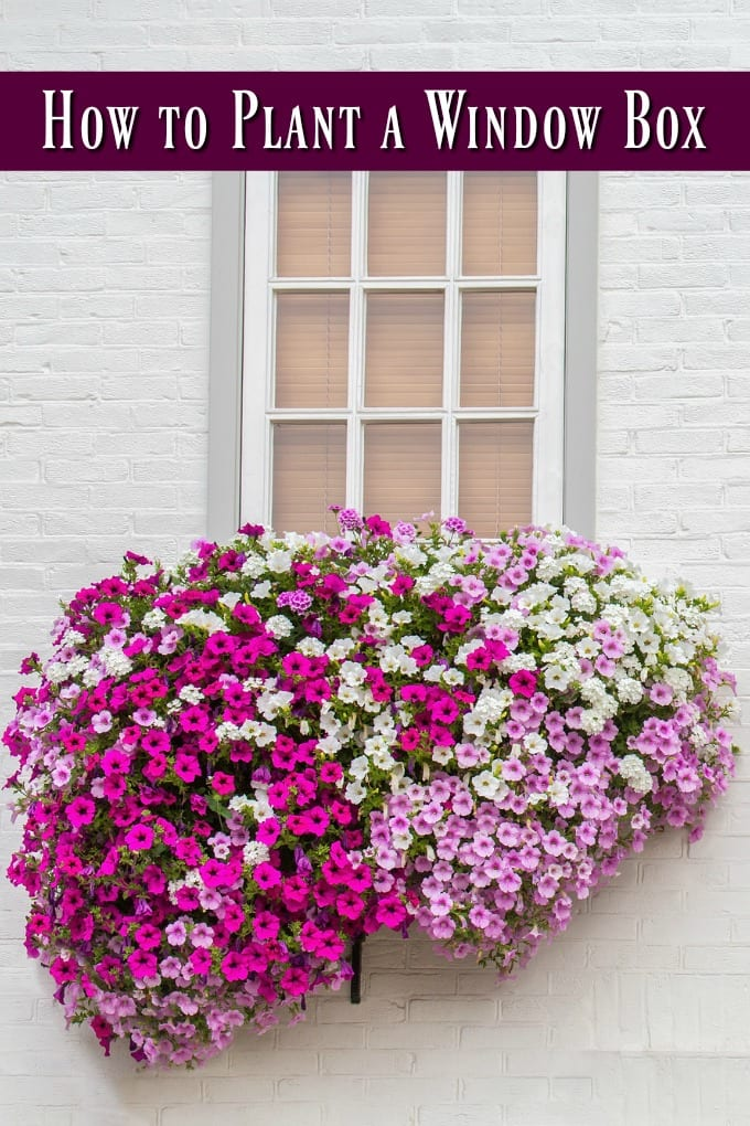 How to Plant a Window Box - White brick wall with window and flower boxes