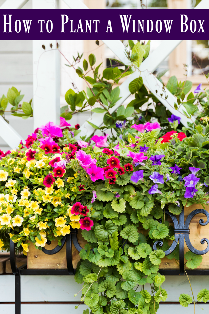 Window boxes allow you a lot of gardening freedom, but there is a correct way to do it. Here are the best plants for window boxes and even how to plan a window box! via @jugglingactmama