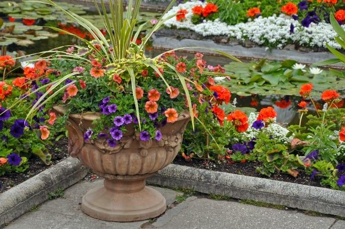 container garden ideas- Decorative petunia planter