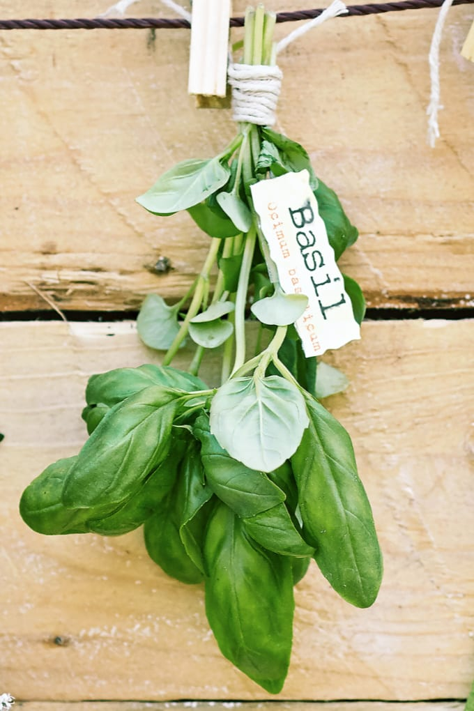 Basil leaves gathered and tied together with twine, accompanied by a label.