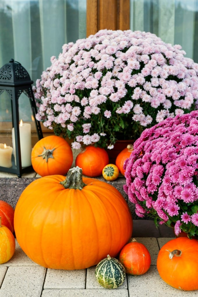 Beautiful porch decoration with pumpkins, gourds, and mums.